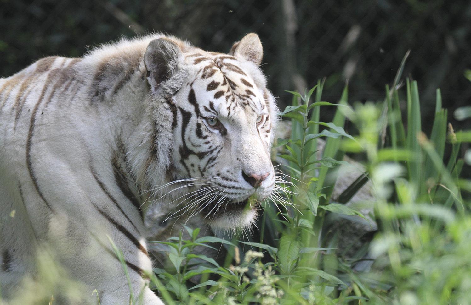 zoo-asson-bigorre-bearn-mag-2-e1562322711277